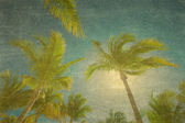 Tropical palm trees background — 图库照片