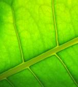 Leaf of  plant background — Stock Photo