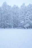 Winter forest in cold day — Stock Photo