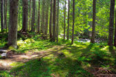 Morning  in  green forest — Stock Photo