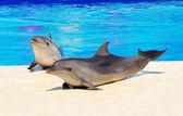 Happy dolphins  near pool — Stock Photo