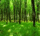 Árboles de madera — Foto de Stock