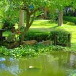 Spring Asian garden — Stock Photo #72365217