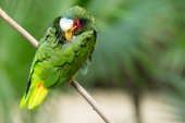 Exotic parrot bird — Stock Photo