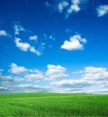 Zielone pole i błękitne niebo — Zdjęcie stockowe