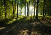 Forest trees in wood — Stock Photo