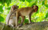 Monkeys animals on nature — Stock Photo
