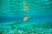 León peces nadar — Foto de Stock