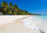 Caribbean Beach and Palm trees — Stock Photo