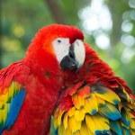 Parrots birds on nature — Stock Photo #74225111
