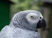 Portrait of Parrot bird — Stock Photo