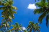 Palm trees on the sky — Stockfoto