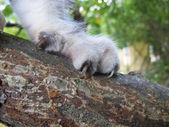 Cat's paw — Stock fotografie