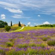 Lavender field in Provence, France. — Stock Photo #54268615