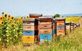 Bee hives. — Stock Photo