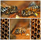 Beekeeping collage — Stock Photo