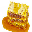Sweet honeycombs with honey — Stock Photo #55584593
