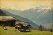 Small farm in Swiss alps — Stock Photo