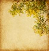 Branch of autumn leaves — Stock Photo
