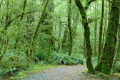 Temperate rain forest — Stock Photo