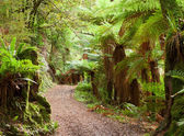 Road in temperate rain forest — Stock Photo