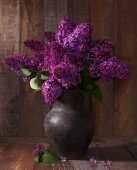 Purple Lilac in clay pot — Stock Photo