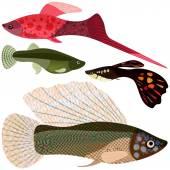Set viviparous fishes aquarium. — Stock Vector