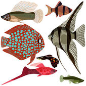 Collection aquarium fishes. — Wektor stockowy