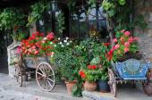 Flowers in the Carts and Planters — Foto Stock