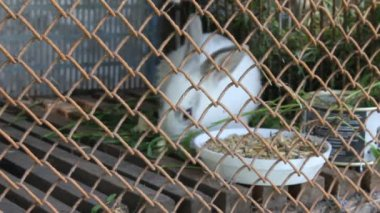 White rabbit in cage — Stock Video