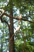 White cockatoos sitting on a tree — Stock Photo