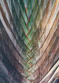 Interwoven pattern — Stock Photo
