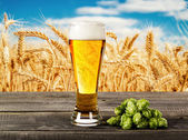 Beer glass and wheat field — Stockfoto