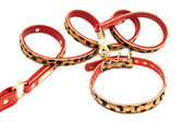 Beautiful leash and collar — Stock Photo
