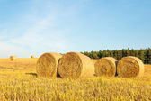 Haystacks in the field — Stock Photo