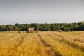 Haystacks in the field — Stock Photo