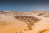 Landscape of Morocco — Stock Photo