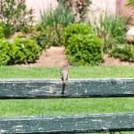 Sparrow in a garden — Stock Photo #55620259