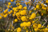 Flora of Souss Masa National Park — Stock Photo