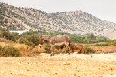 Brown donkey — Stock Photo