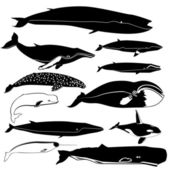 Contours of the whales — Stock Vector