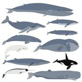 Whales — Stock Vector