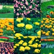 Set of different flowers of spring flowerbed, collection of images — Stock Photo #57067999