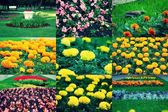 Set of different flowers of spring flowerbed, collection of images — Stock Photo