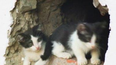 Street kittens outdoors — Stock Video