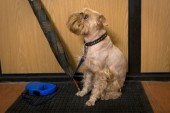 Dog  waiting for a walk — Stockfoto