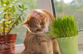 Cat and vase of fresh catnip — Stockfoto