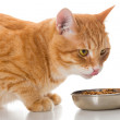 Orange cat eats a dry feed — Stock Photo #54967109