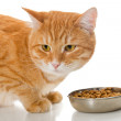 Orange cat and dry feed — Stock Photo #54967125