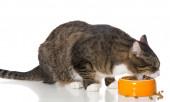 Gray striped cat eats dry food — Stock Photo